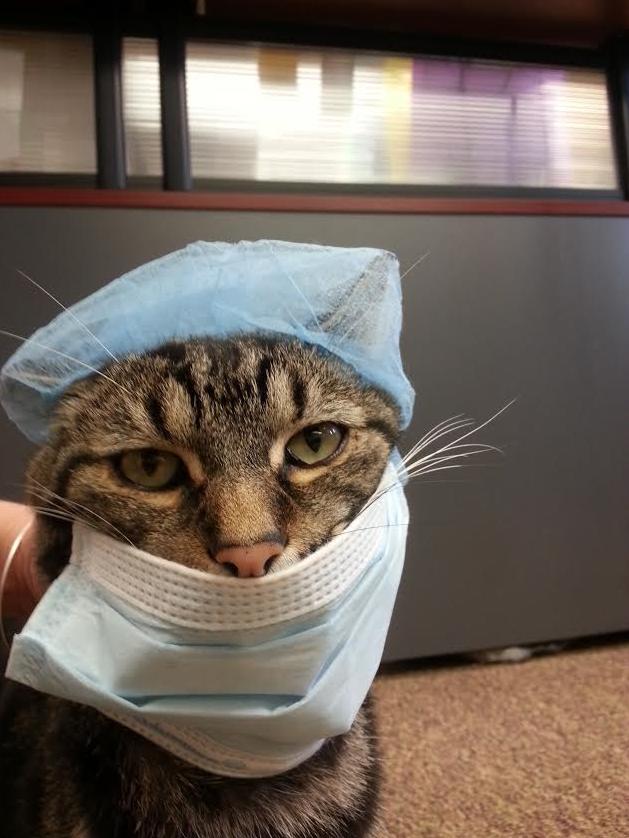 Our New Cat Bari-Cat-Trics
